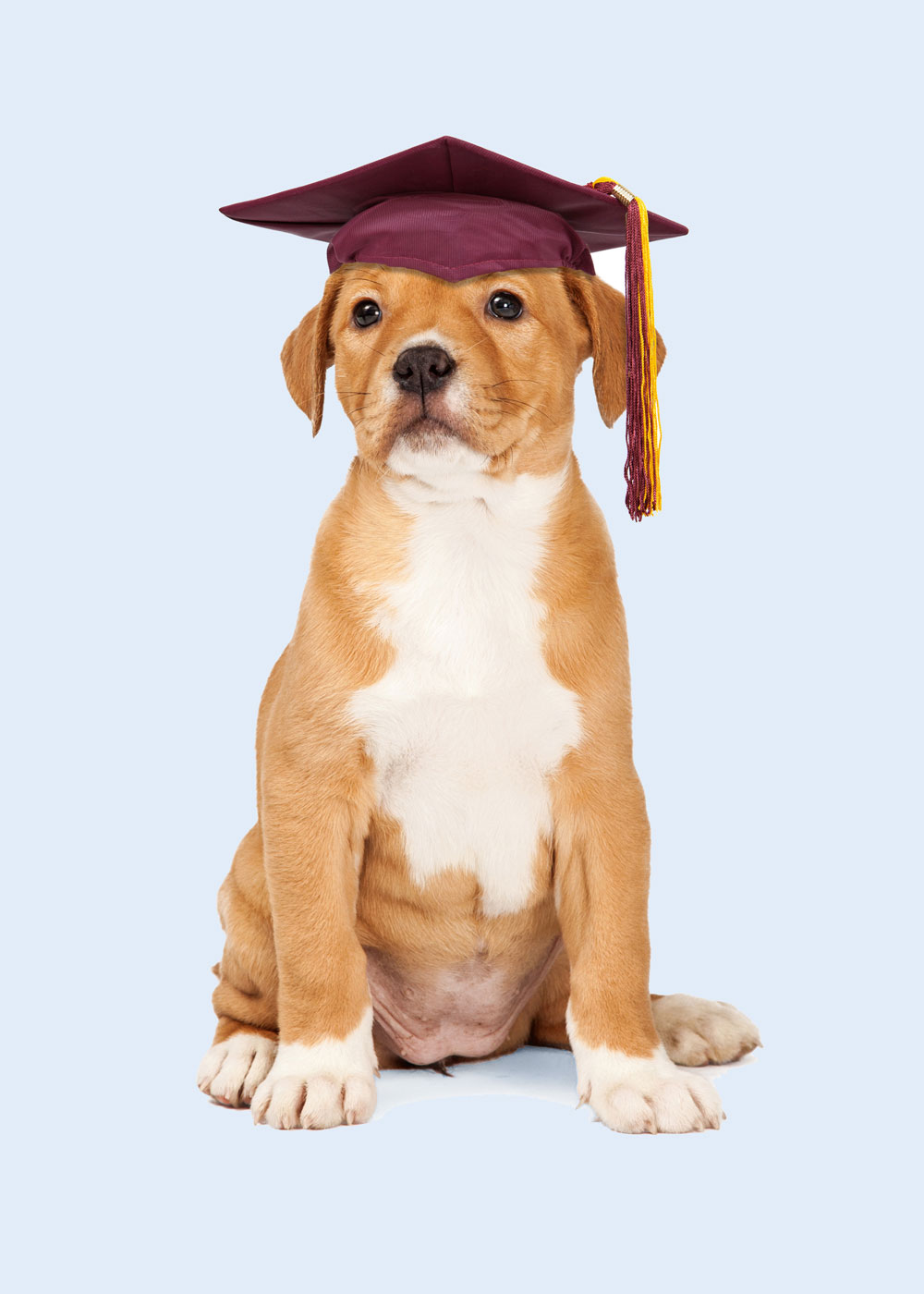 education-canine