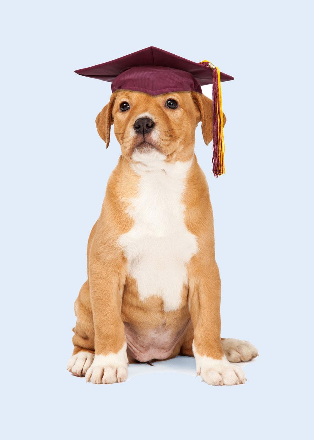education-canine